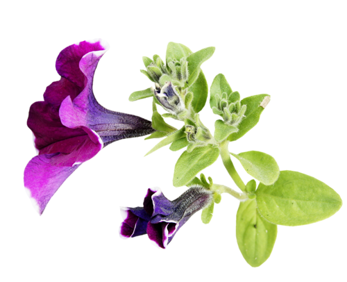 Fleurs Tige Série 8