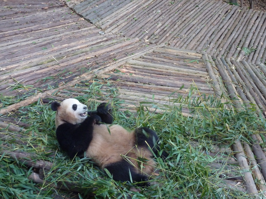 Ma rencontrre avec les pandas