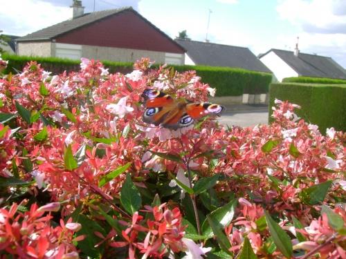 Le papillon