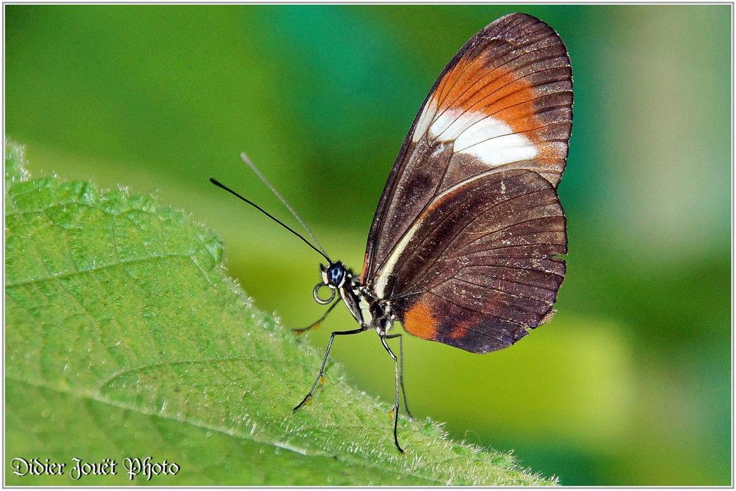 Z'autres... Papillons Exotiques