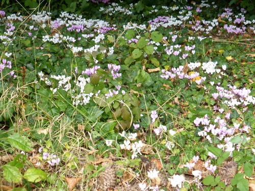¨PAUSE: mon jardin en ce début octobre.