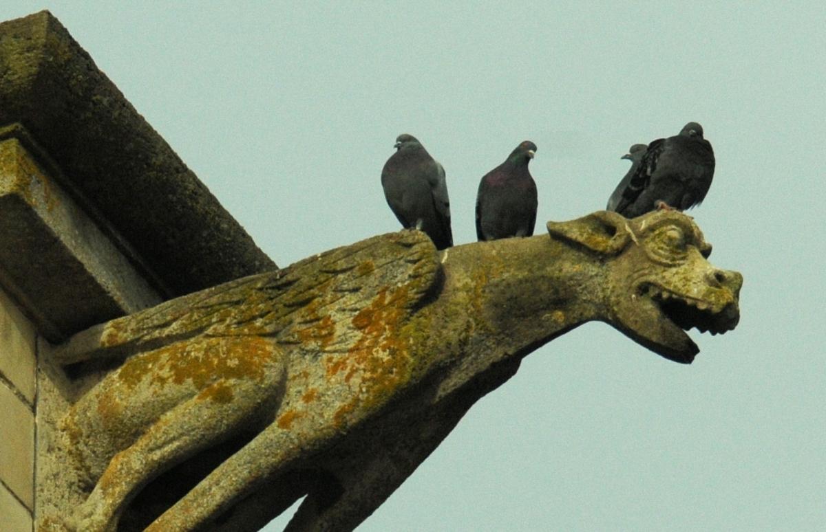 La gargouille et ses amis