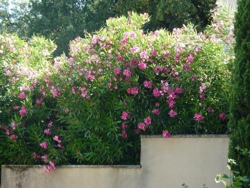 Les petites plantes du quartier