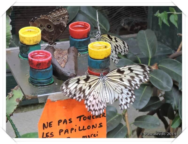 Au Paradis du Papillon à Sanguinet - 1/10
