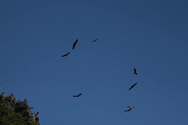rando au lac d'Arlet-8-vautours fauves
