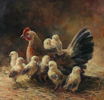 Pétition pour interdire l'élevage en batterie