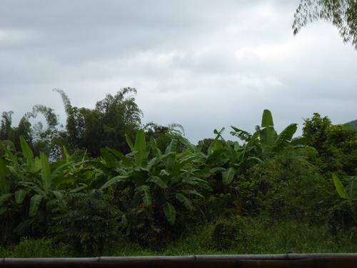 Plantations de bananes, cacao et arrivée à Guayaquil