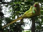 Papagei am Knödel