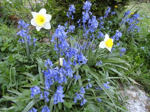 Floraisons d'avril