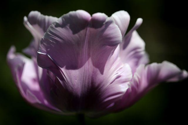 Tulipes 2020 : James Last