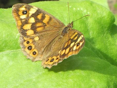 les-papillons-6455.JPG