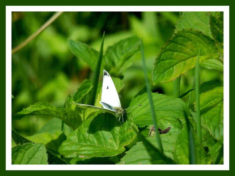 Riviere.Papillons et libellules.Images gratuites.Volet 2.