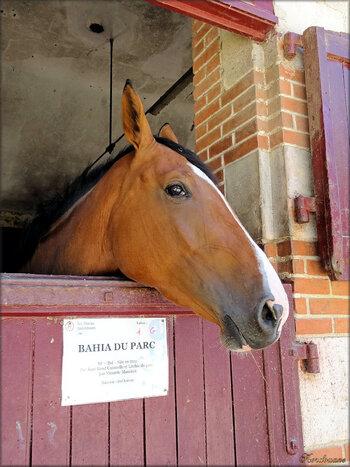 Photos des chevaux au box (haras de la Vendée)