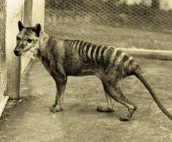 Les animaux disparus et en voie de disparition