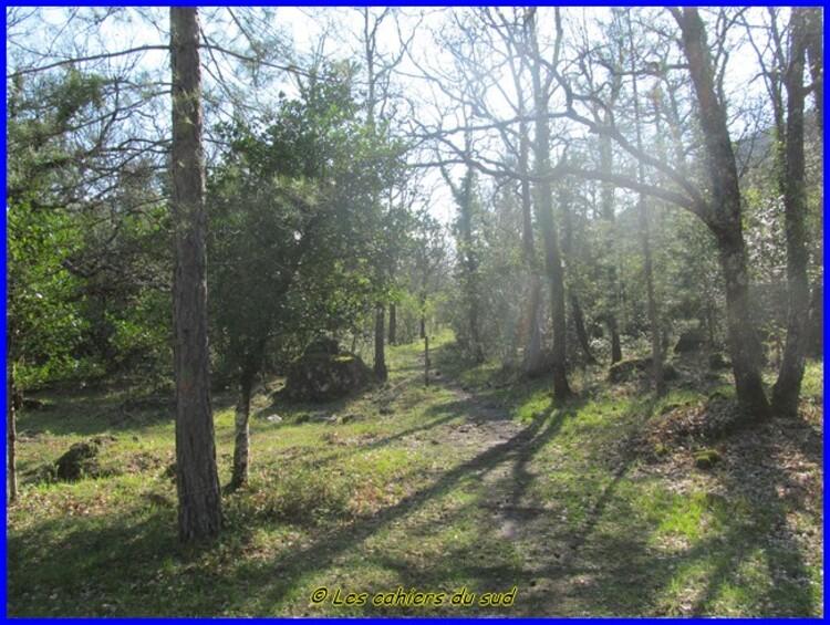 Forêt des Morières, le puits des Bidoufles