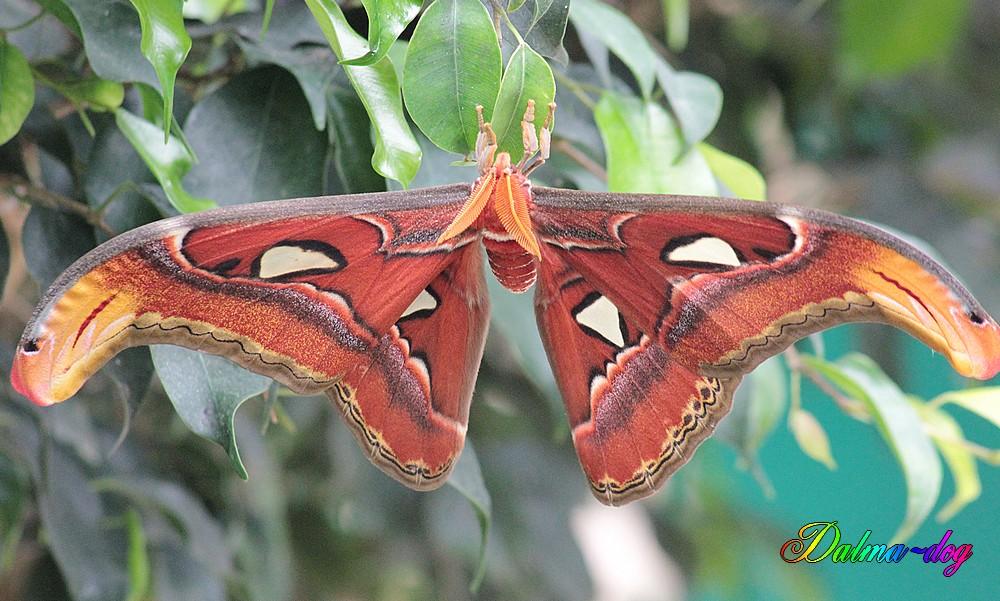 ile aux papillons à Noirmoutier