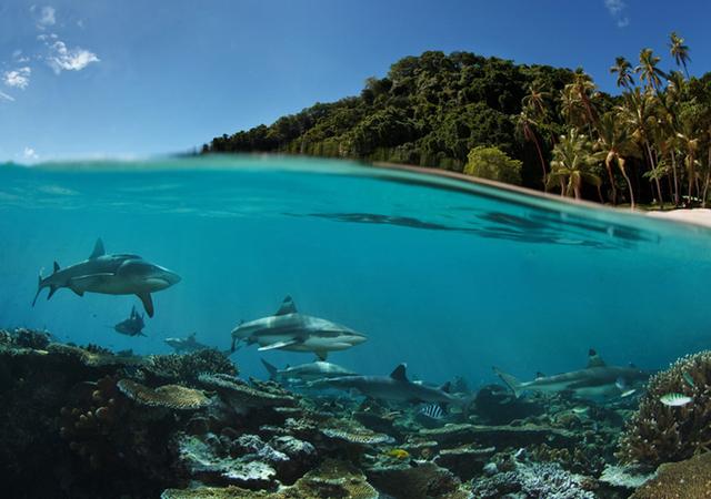 half-underwater-photos-andrey-narchuk