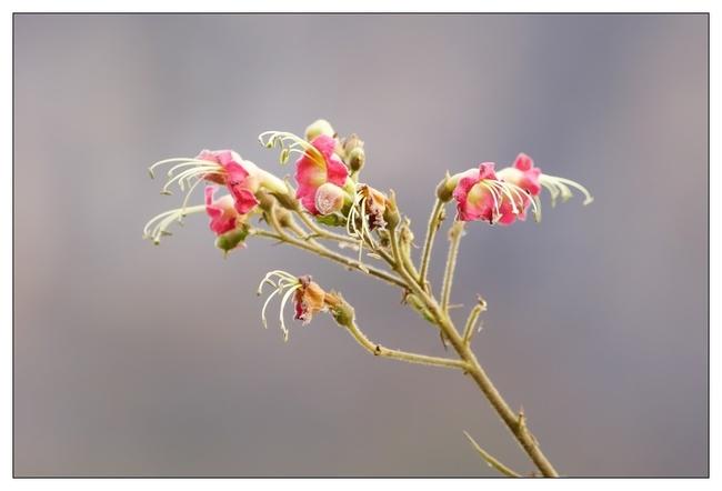 Fleurs suite...