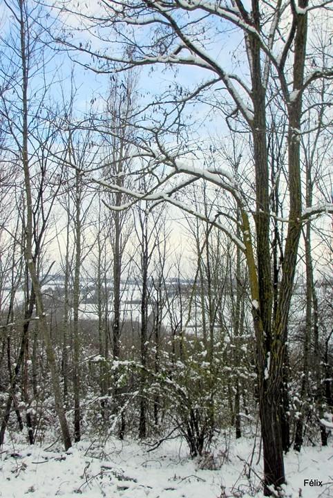 z05---Bois-sous-la-neige.JPG