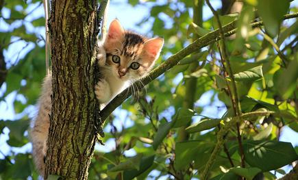 Des chatons dans les arbres