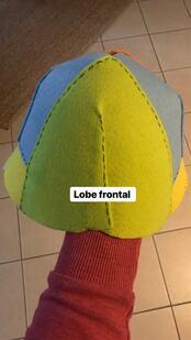 Un cerveau en 3D