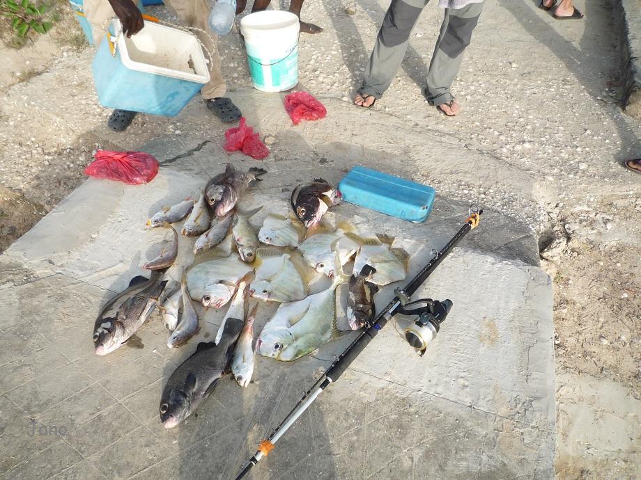 Si on allait à la pêche ?