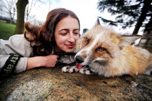 Son animal de compagnie est un... renard se comportant comme un chien