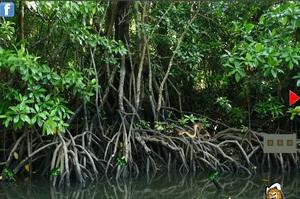 Jouer à Mangroove forest tortoise escape