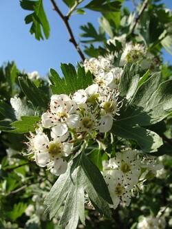 Le printemps à Dushanbe