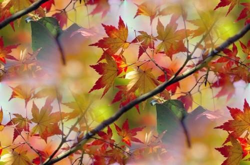 Fonds sans soudure automne