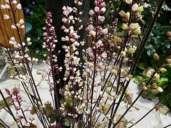 Heuchera-Prince-silver-en-fleurs--28-6-10-022.jpg
