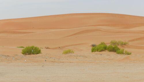 Oman mars 15 (20ème partie)