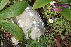 Abécédaire du jardin en été