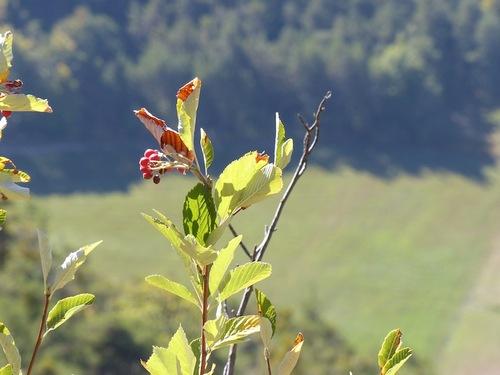 Senteir botanique de Furmeyer (Veynes)