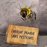 """Résultat de recherche d'images pour """"abeilles pesticide"""""""