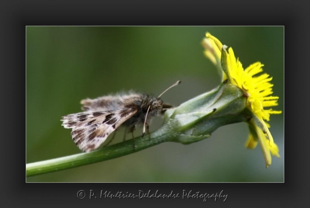 Mystérieux papillon...