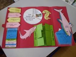 Lapbook sur les requins