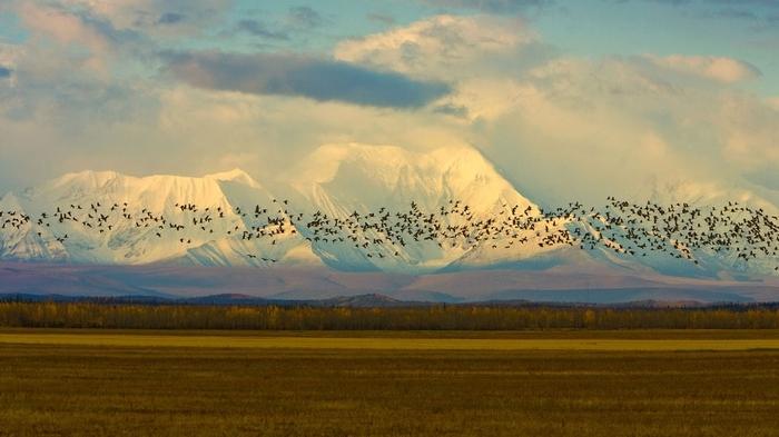 s du Canada près de la chaîne d'Alaska, Delta Junction, Alaska Etat