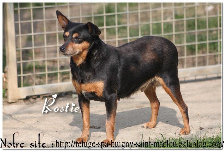 Rostie - nouvelles photos