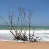 Plage de Tangalle - Sri Lanka