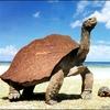 tortue noix de coco.jpg