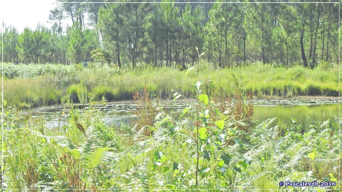 Les lagunes du Gat-Mort - Juillet 2016 - 55