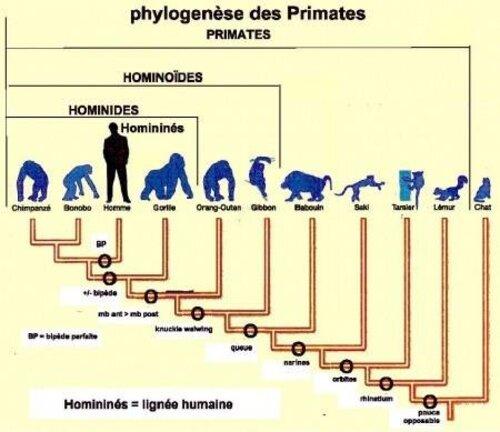 dans   la théorie    sur   l'  évolution