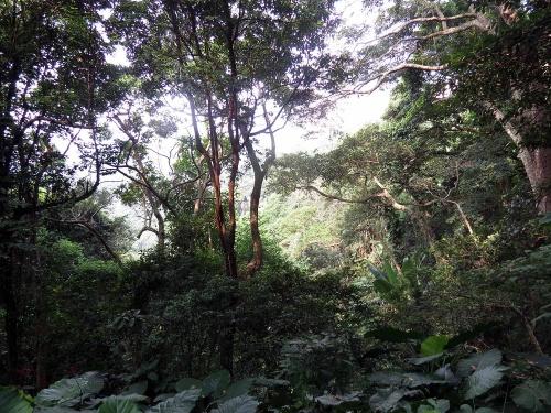Mount Cameron Road - Aberdeeb HK 4ème journée