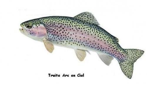 Les poissons que l'on trouve dans Le Morvan