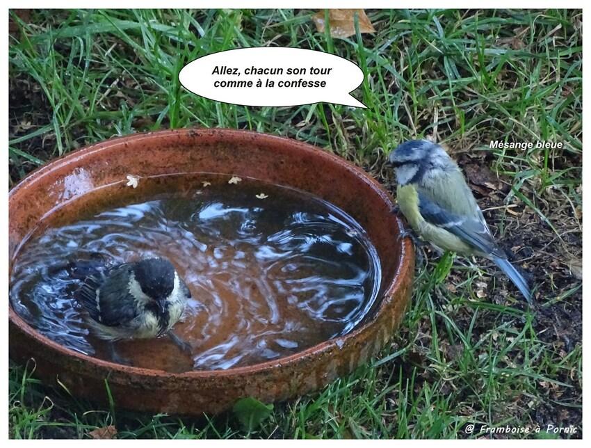 L'heure du bain au jardin