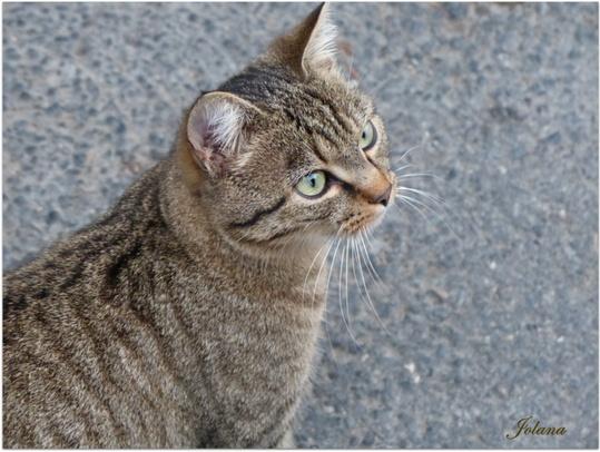 chat du quartier