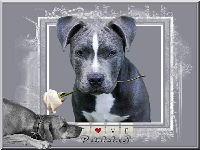 st valentin chez les animaux