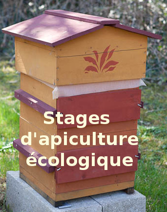 Stages apiculture