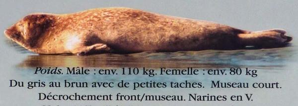 La grande aventure de la Baie de Somme : la sortie phoques